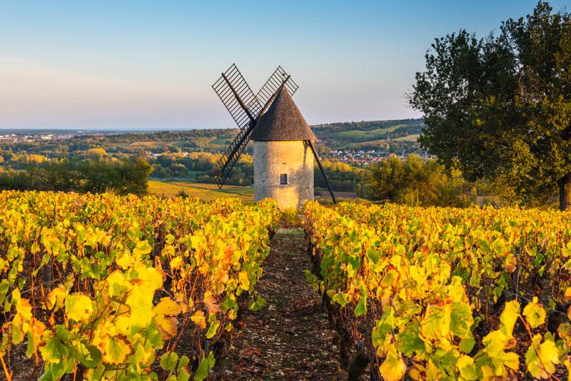 viñedo vino Borgoña Franica