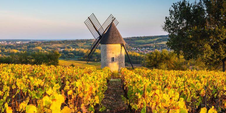 Francia Viñedos Europa vino