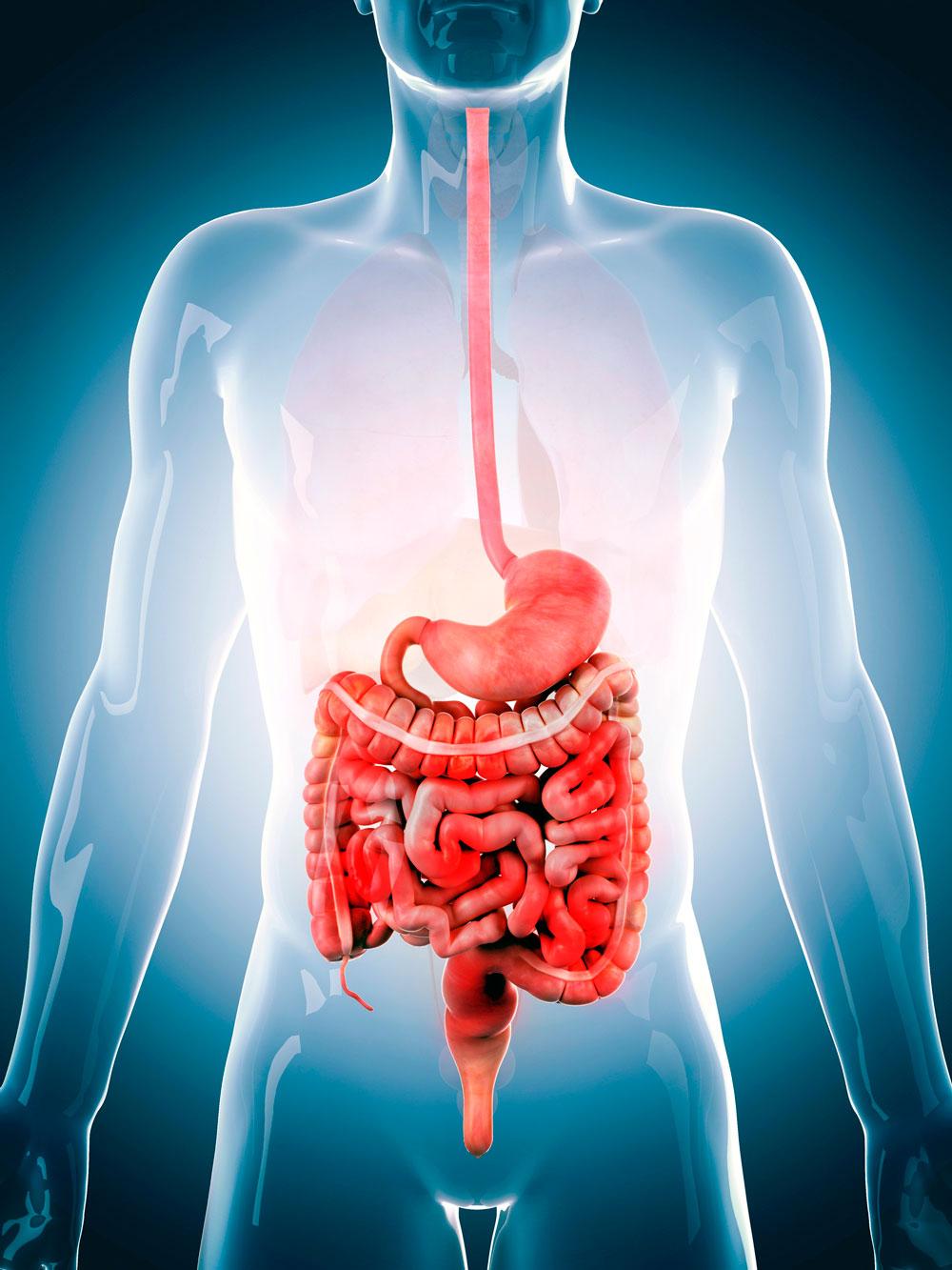 intestino heces virus trasplantes fecales