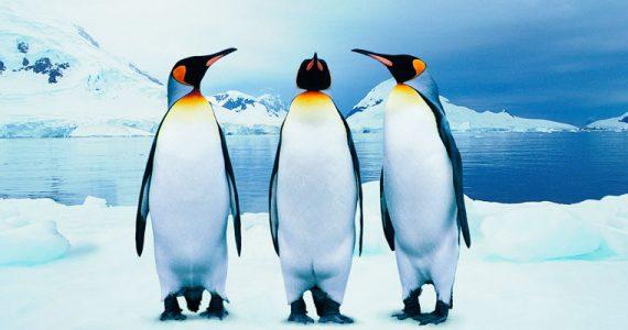 pingüino rey excremento Antártida