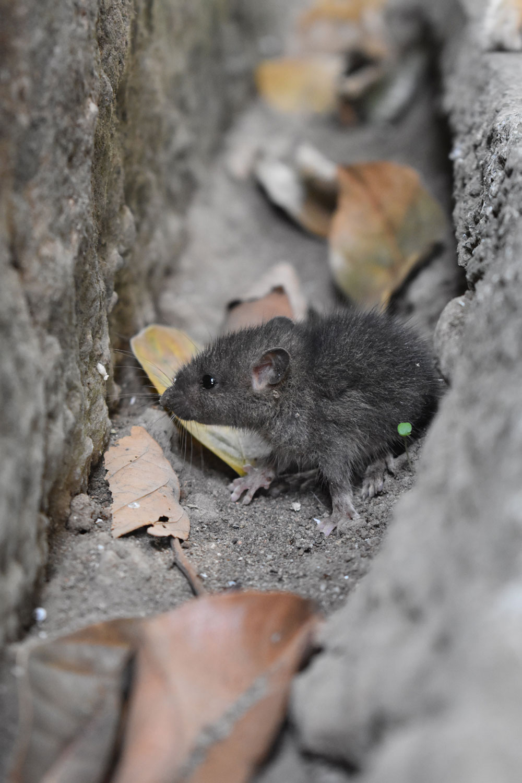 ratón gatos ratones humanos