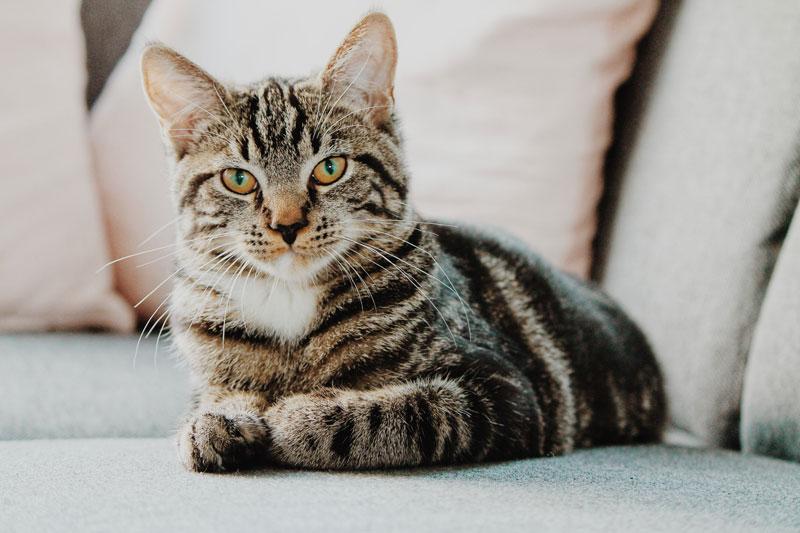 gato doméstico ratón humanos
