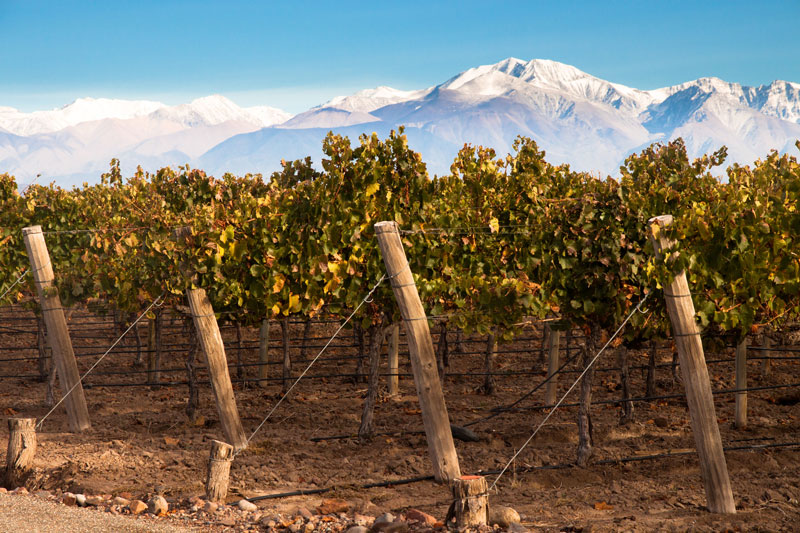 Mendoza Argentina viñedos