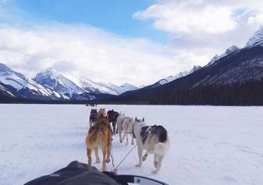 perros en trineo Canadá Alberta Canmore
