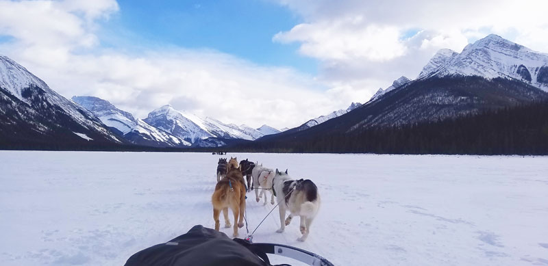 Albera Canadá Canmore perros de trineo