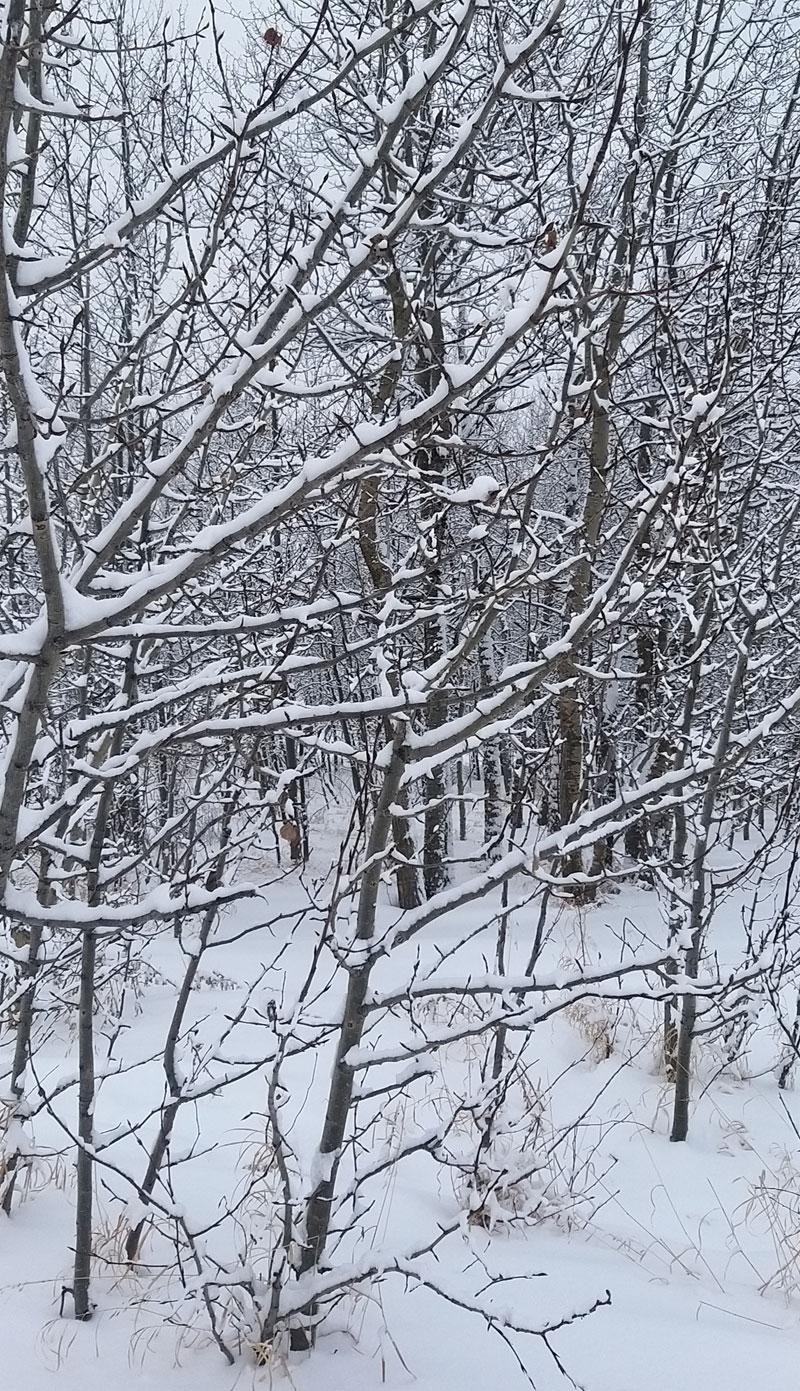 nieve Parque Nacional de Elk Island