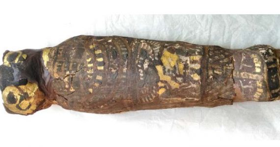 momia halcón feto humano Egipto