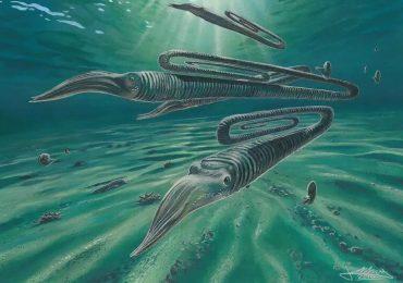 Diplomoceras maximum