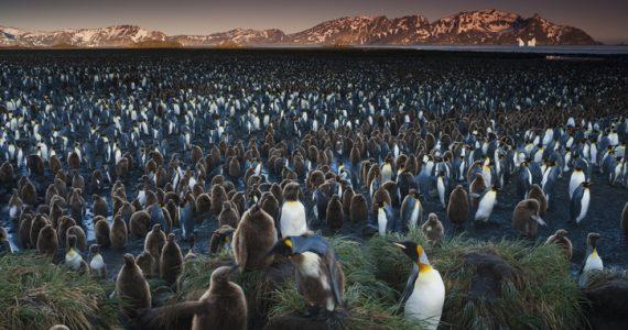 colonia de pingüinos iceberg gigante