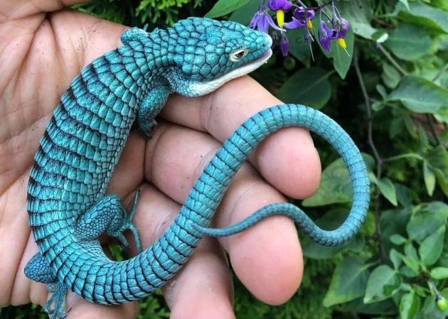 increíbles animales mexicanos
