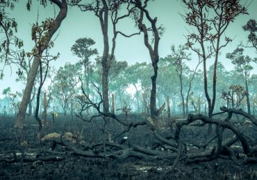 los árboles del Amazonas están muriendo