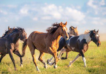 caballos salvajes mustang