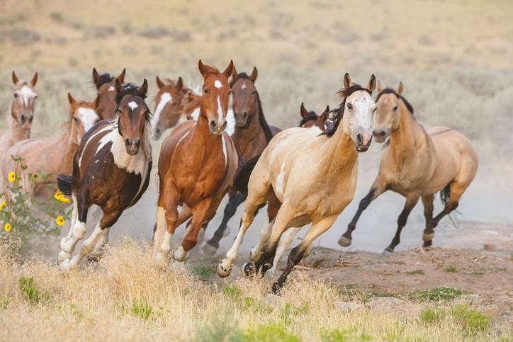 mustang caballos salvajes