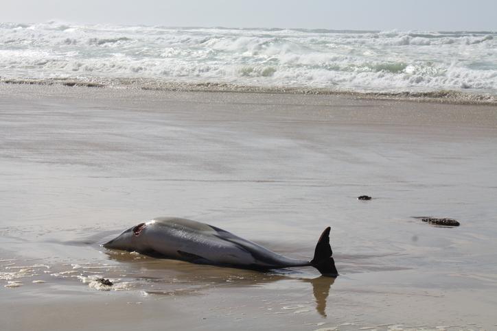 delfines enfermedad