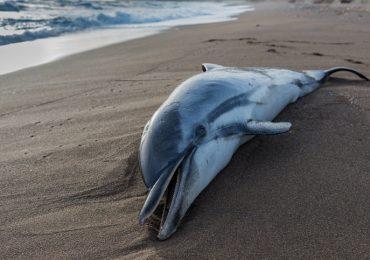 enfermedad delfines