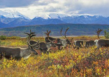 extraer petróleo Alaska