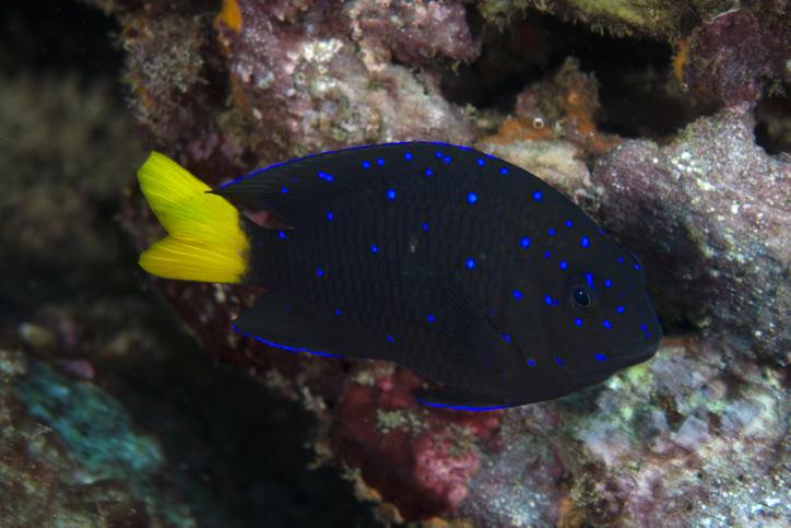 peces domestiacion