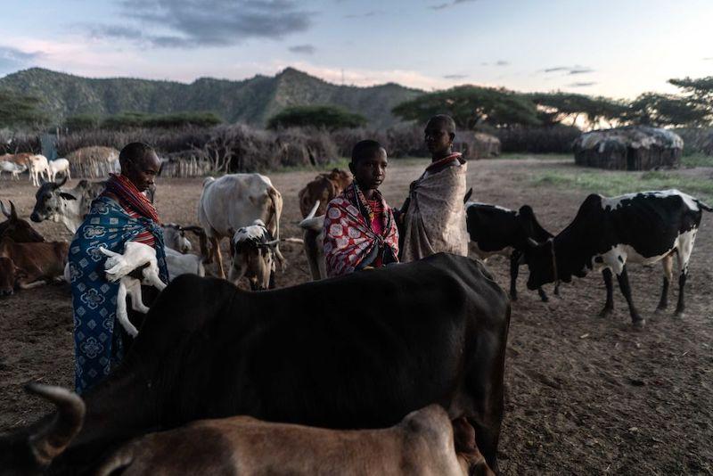Una plaga de langostas invade África y amenaza la comida de 35 millones de personas