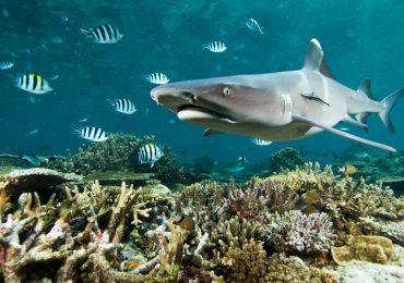 tiburones arrecife
