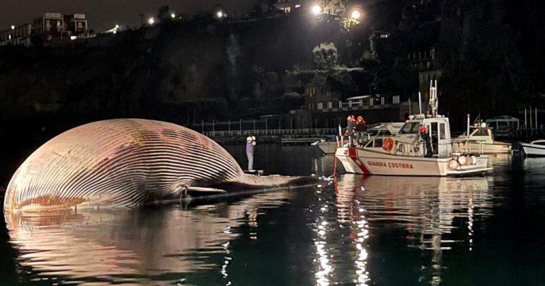 ballena italia