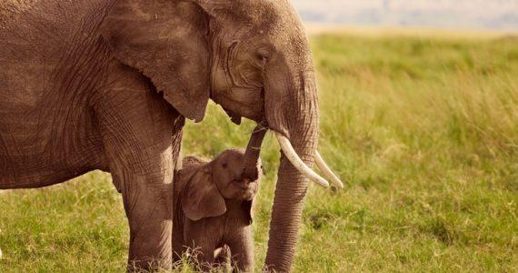 elefantes espacio