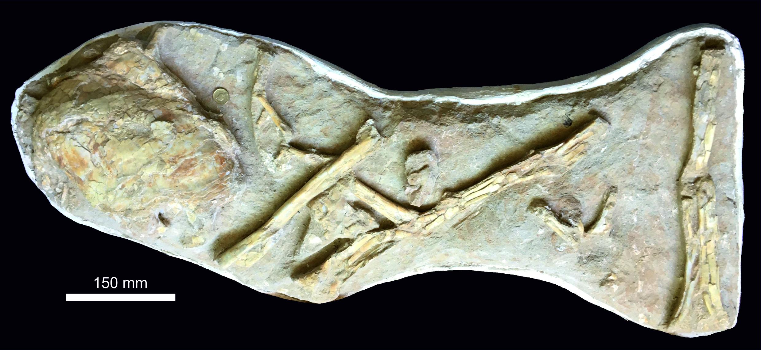 fósil de un pez