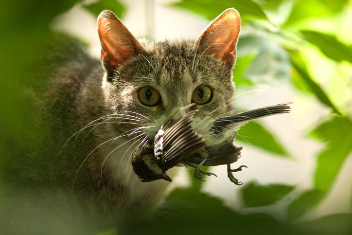 gatos cazadores