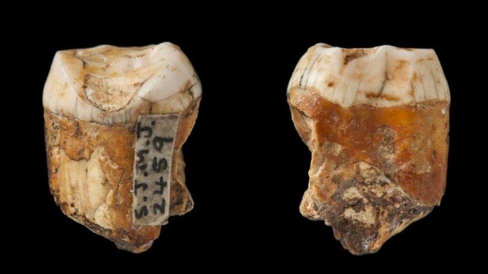 neandertal