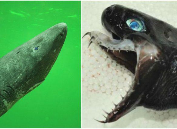 tiburones raros