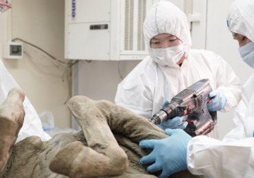 virus de animales prehistóricos