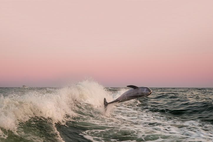 salto de los delfines