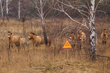 animales Chérnobil