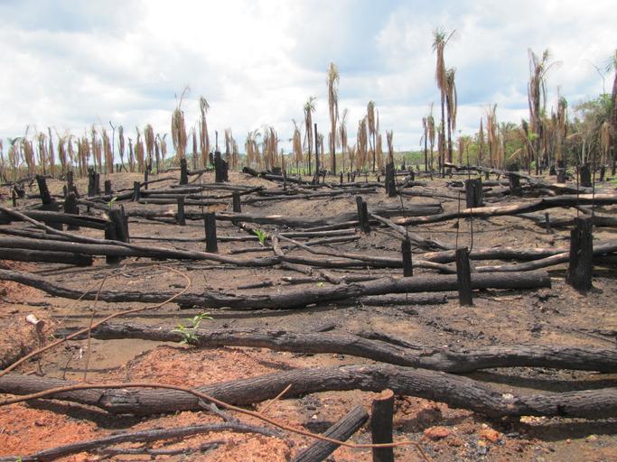 bosques húmedos
