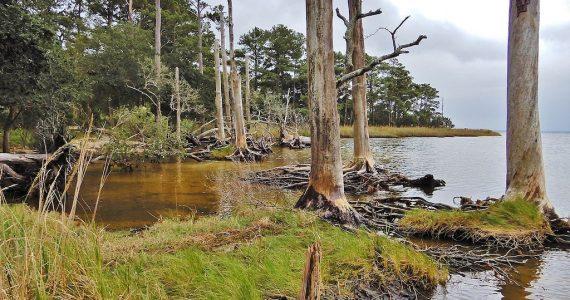 bosques fantasma