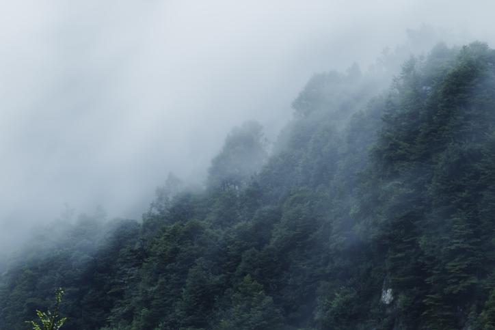 hectáreas de bosque