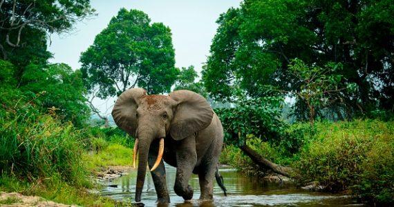 selvas de África
