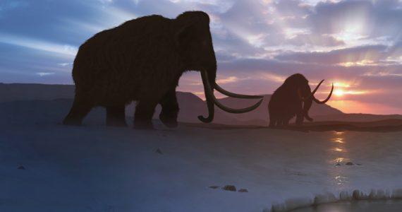 batalla de mamuts