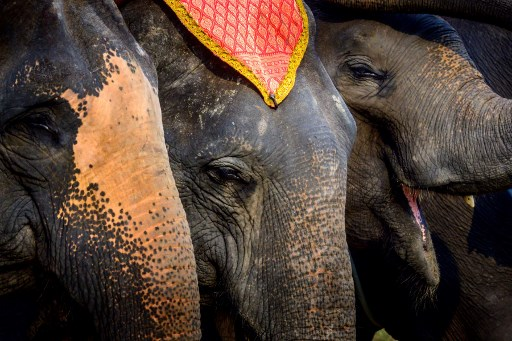 elefantes de tailandia