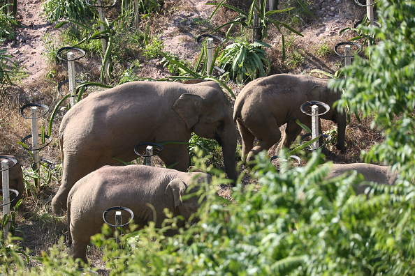 elefantes viajeros