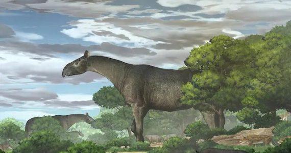 rinoceronte gigante
