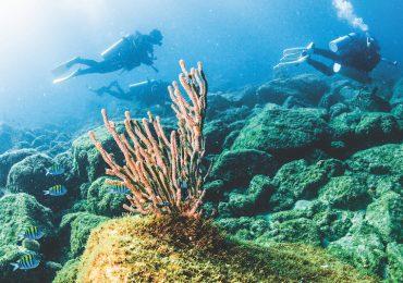 Buceo Baja Sur