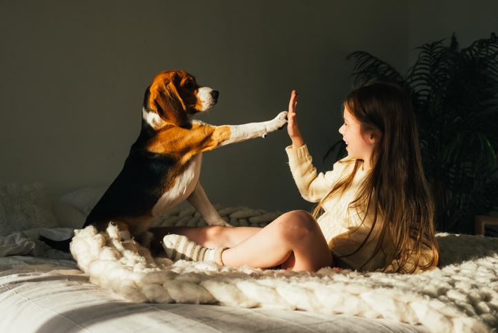 perros genio