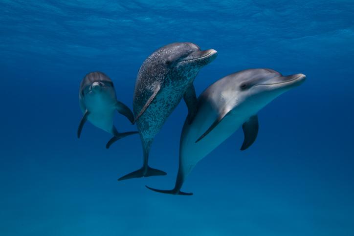 reproducción delfines