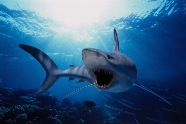 dientes de tiburones