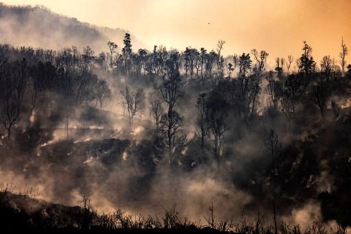 incendios forestales COVID-19