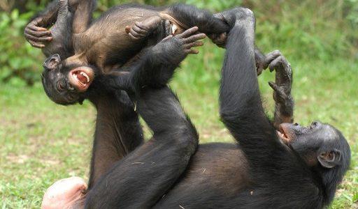 saludos primates