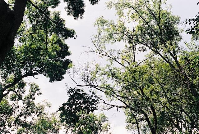 sembrar árboles
