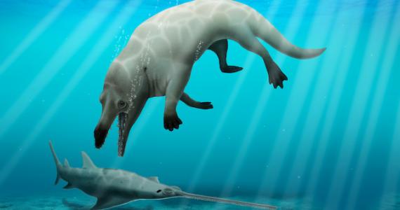 ballena cuatro patas