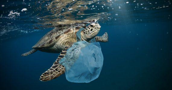 contaminación plástica