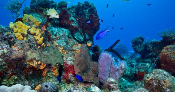 arrecife coral